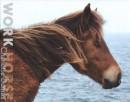 Charlotte Dumas, Work Horse