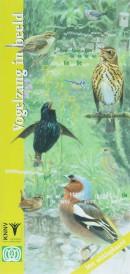 Vogelzang in beeld - vogelgids, natuurgids