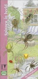 Spinnen in beeld - natuurgids dieren in de tuin
