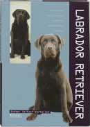 Labrador Retriever